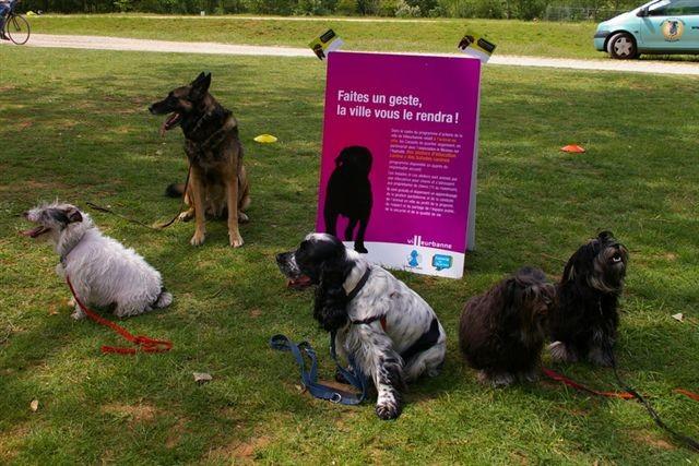Des chiens obéissants et bien éduqués