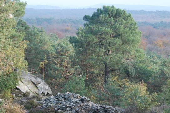 La forêt de Fontainebleau, une forêt royale de renommée internationale !