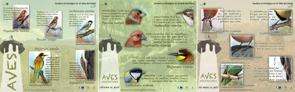 paneles interpretativos aves valle Zalabí ilustraciones. Diego Ortega Alonso