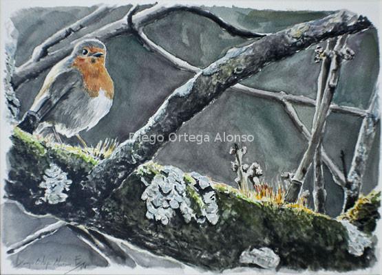 El duende de Sierra Morena. Acuarela sobre papel Saunders Waterford. 31X23. 2014