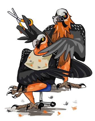 El quebrantahuesos Barberinius pelando a Tono