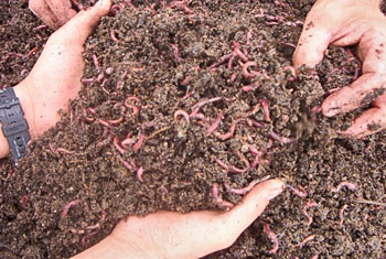 Click on the Picture to learn more about worms and composting