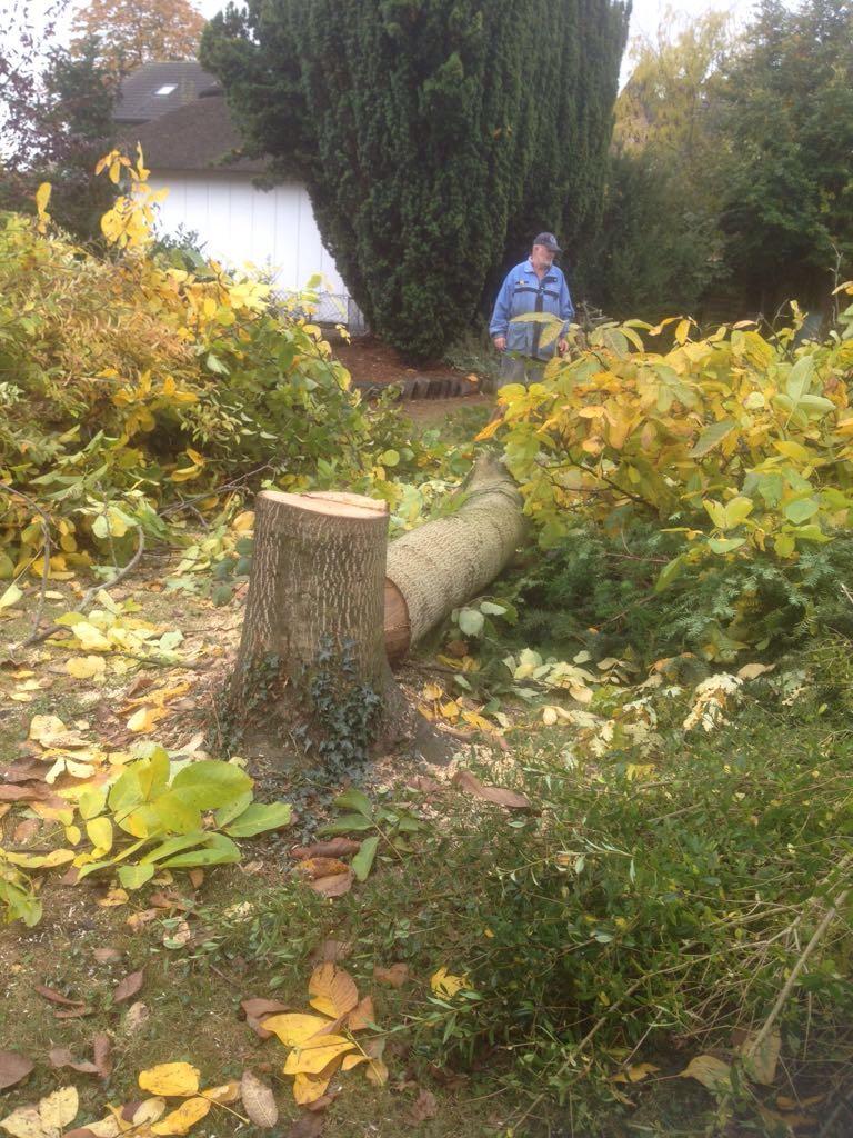 Zum Ende des Jahres hatten wir noch einiges an Gartenarbeit zu erledigen, natürlich ist das auch gutes Kaminholz.