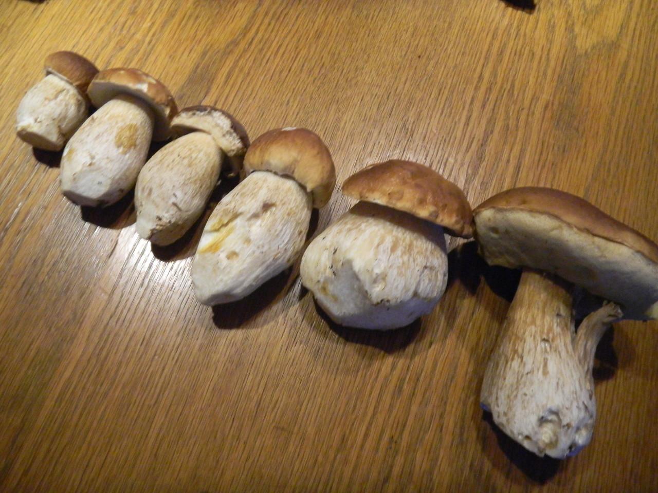 Steinpilze ausder Region frisch geerntet für's Pilzgericht.
