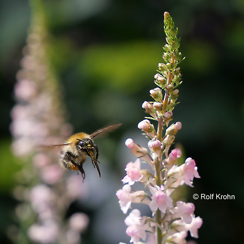 2019 Juli  ökologische Vielfalt  Foto Rolf Krohn