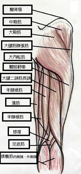 太ももの後ろ側の筋肉(右足)