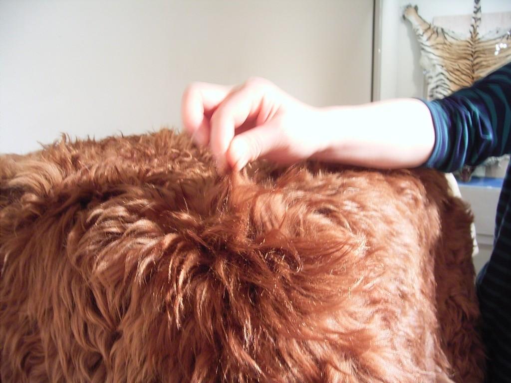 これは毛が長くて、毛糸をとる有名な動物、忘れた。