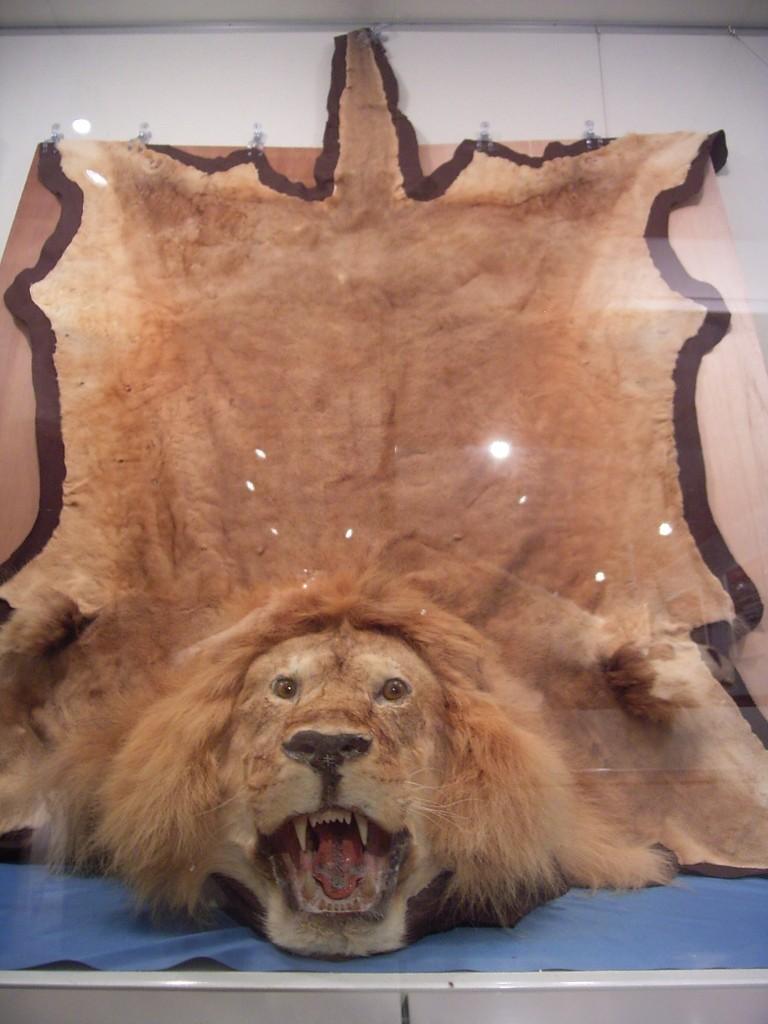 ライオン。頭がでかい。こわい。