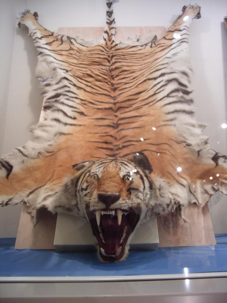 トラ。これは目が合わなかったので、あまり恐くない。