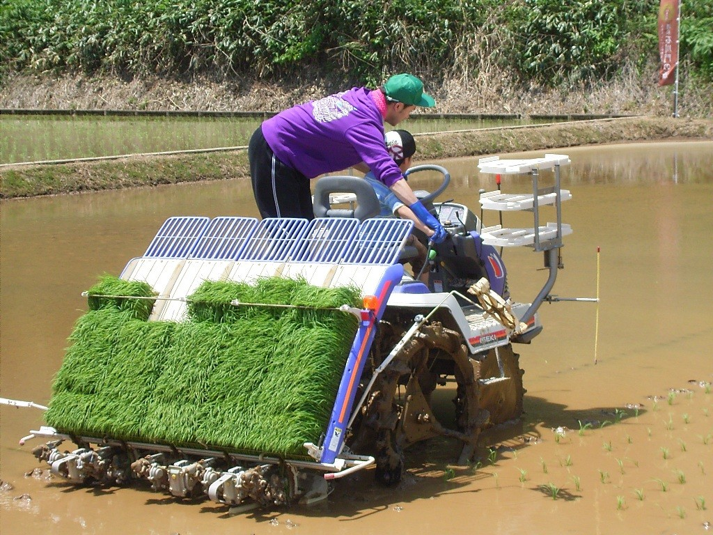 隣の田んぼでは機械植えの体験