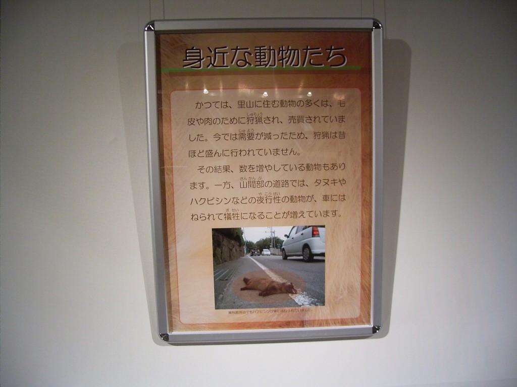 こんな説明パネルもあります。写真は車に引かれた動物。