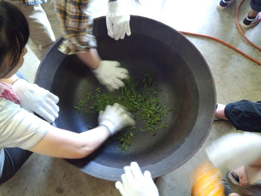 手摘みした茶葉で釜炒り茶の実習。