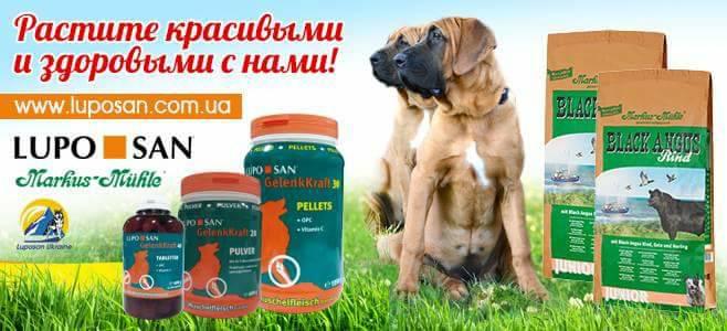 luposan,Luposan & Markus-Muhle,tosa inu puppies,витамины люпосан