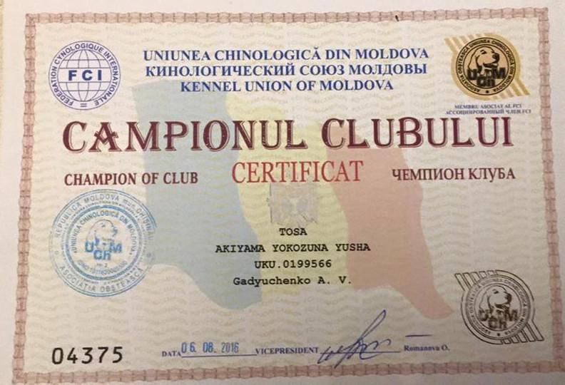 Чемпионский Сертификат Тоса Ину AKIYAMA Yokozuna Yusha