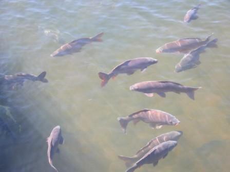 ...dicke Fische - und vieles mehr.