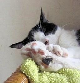 寝てる時はこんなに愛くるしいのだが…