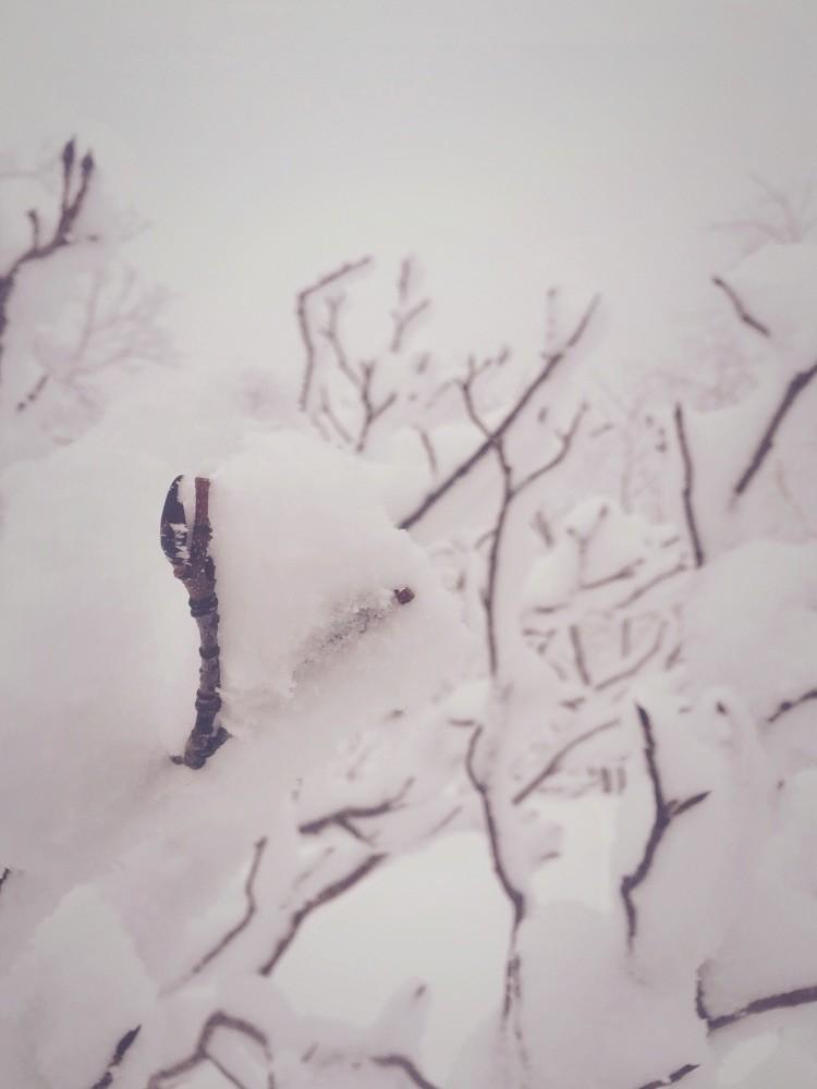 小枝の様子