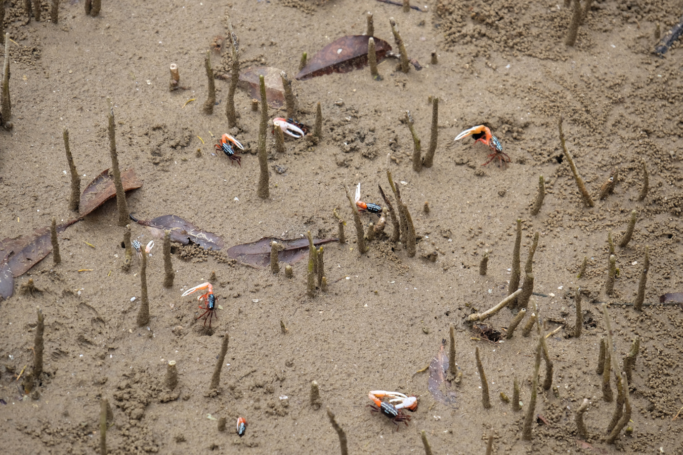 Erst beim zweiten oder dritten Hinschauen, bemerken wir, das unter uns alles voller Krabben ist