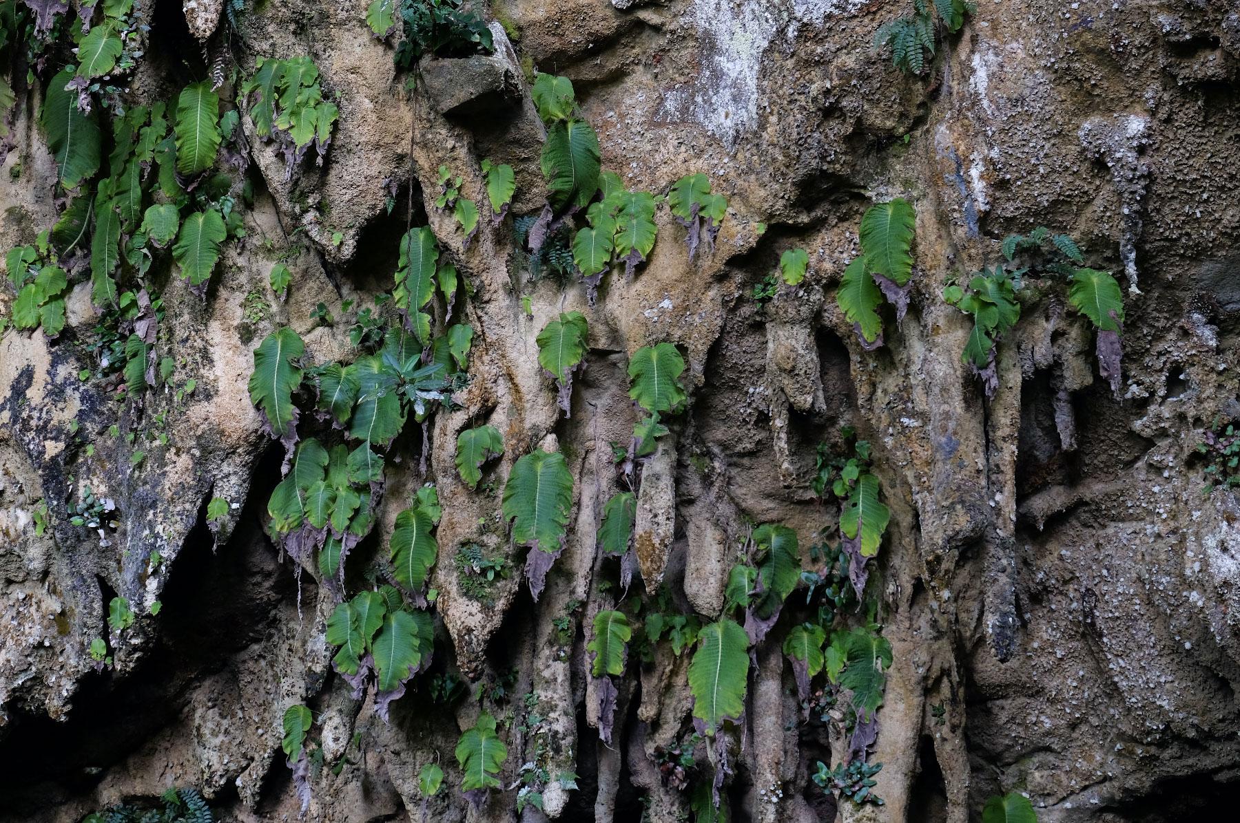 Höhlen Pflanzen