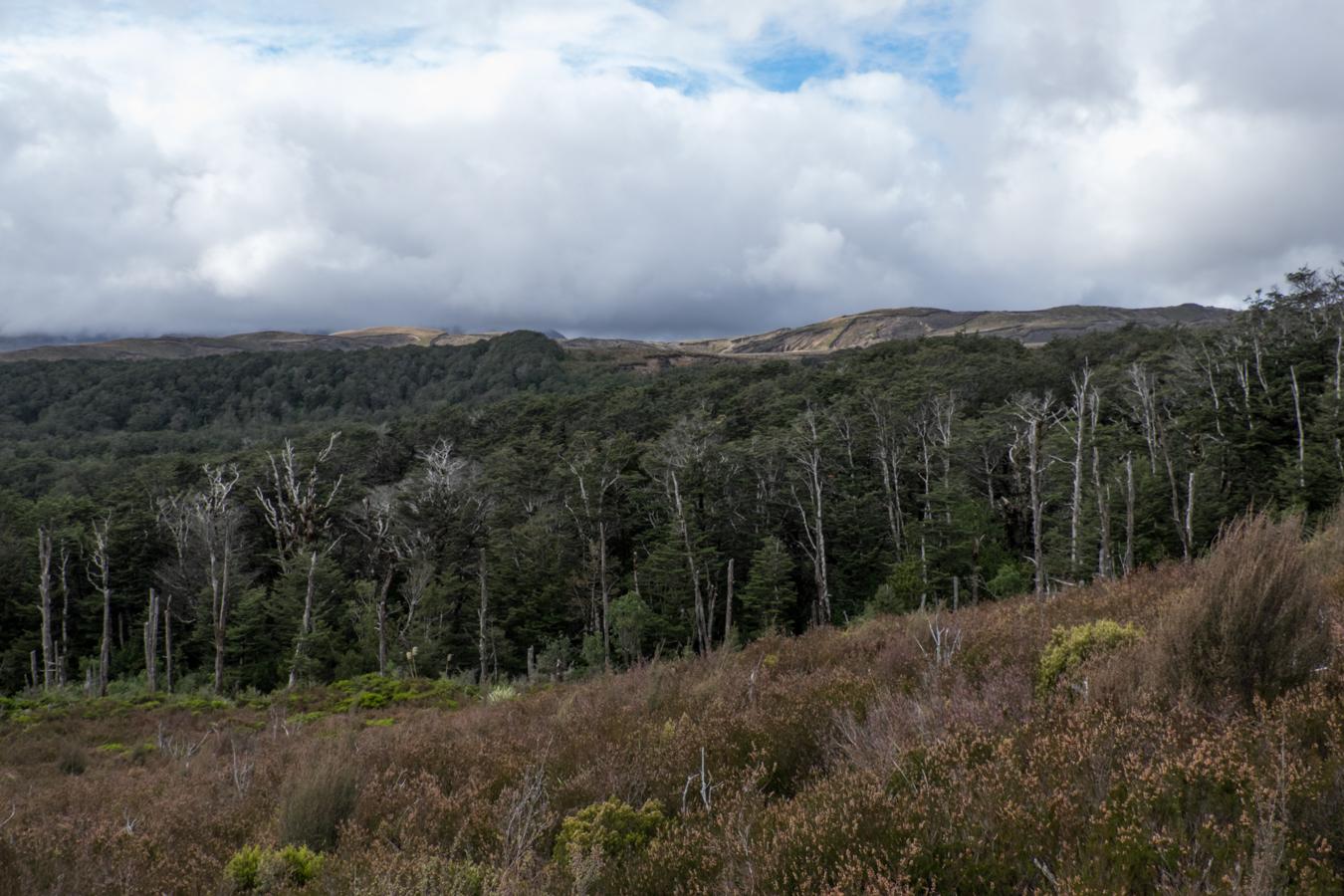Das letzte Stück Weg, führt durch einen dicht bewachsenden Wald