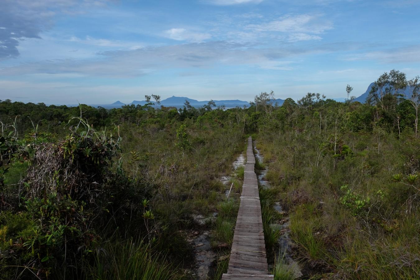 auf allen Wanderungen durchquerten wir unterschiedlichste Vegetationen