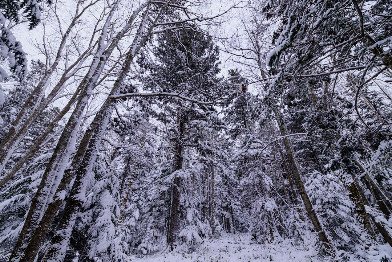 ようやく雪景色