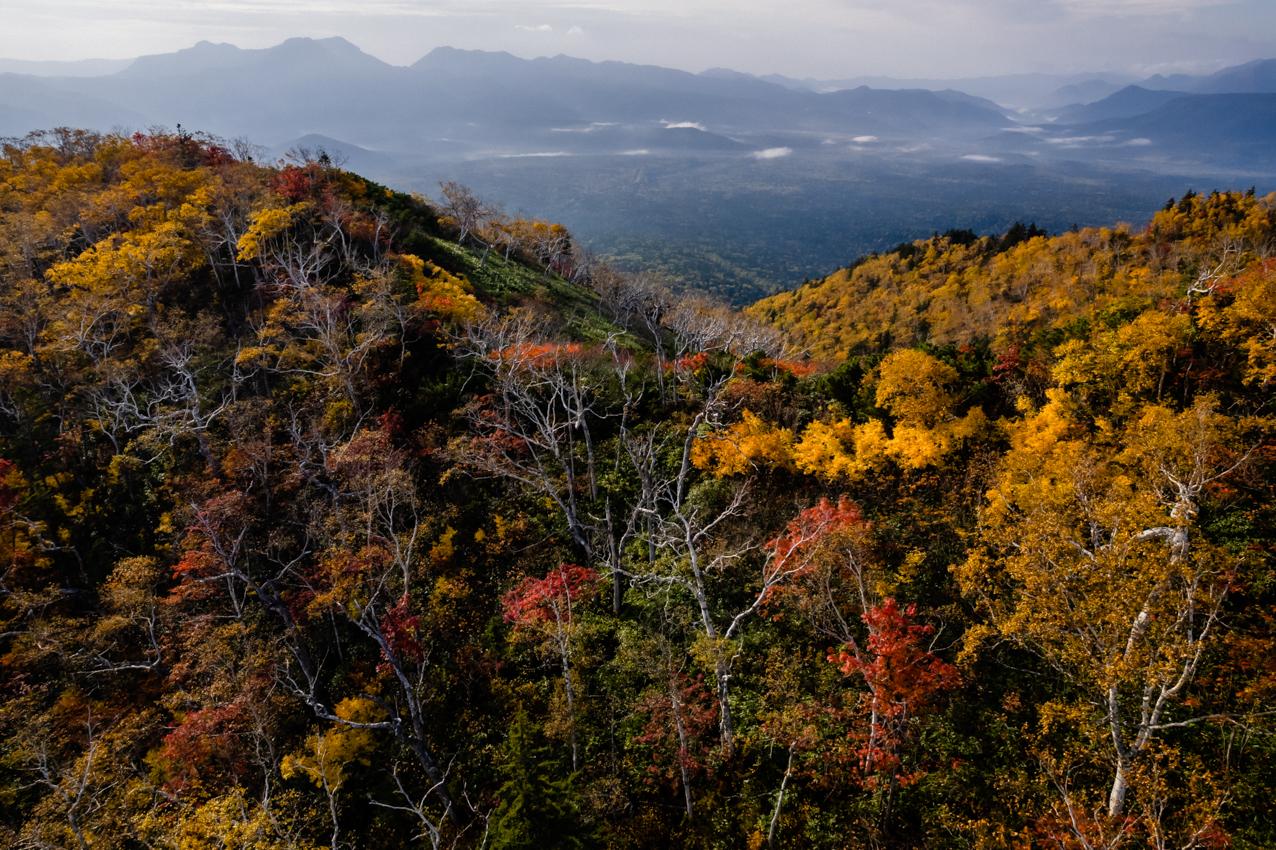 紅葉、山を下る