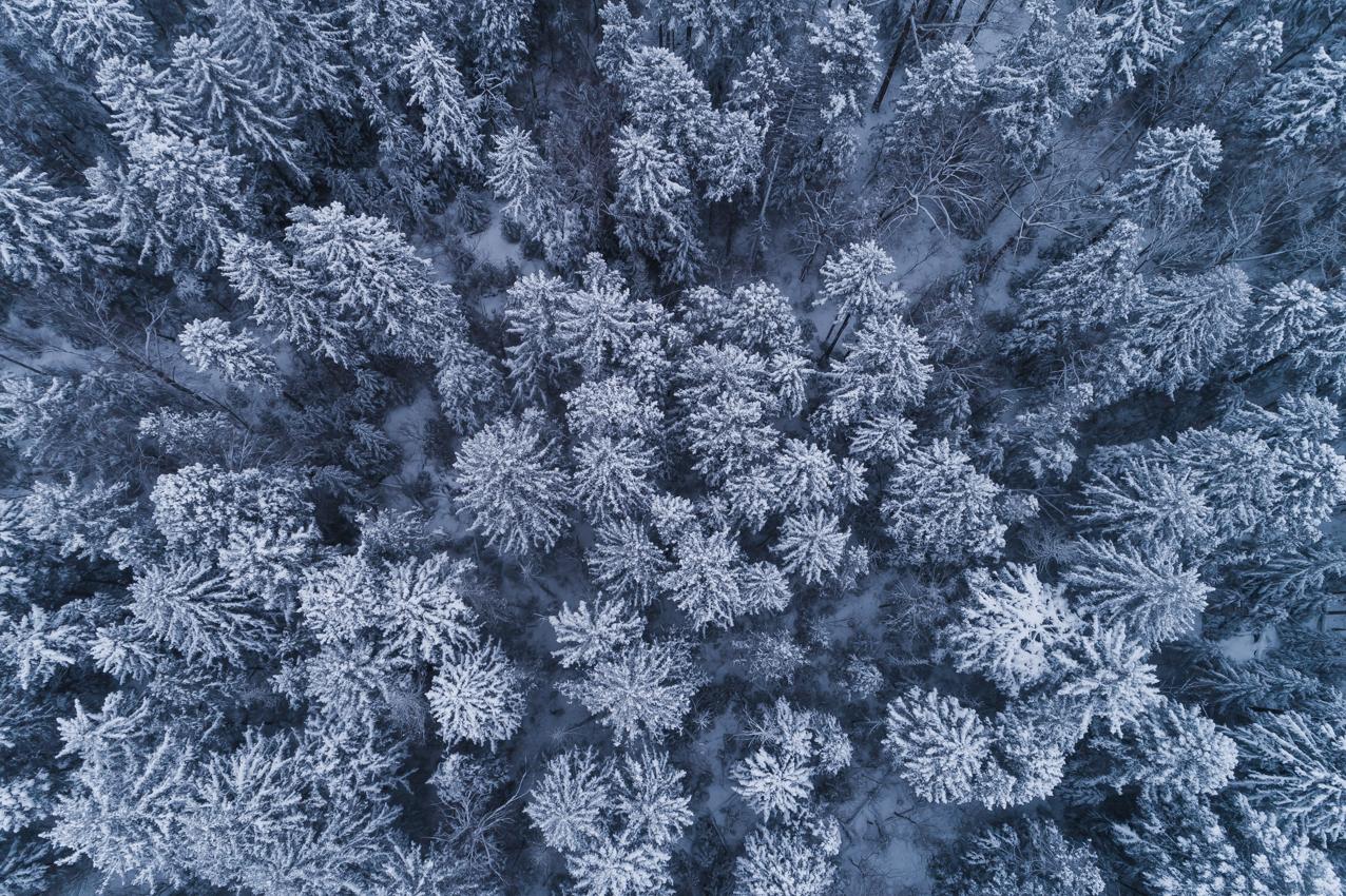 雪に染まる