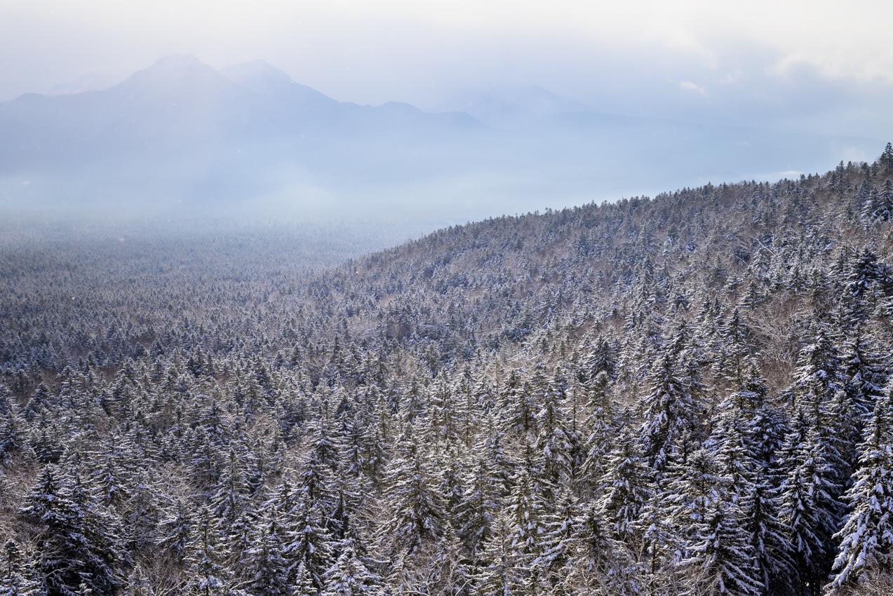 春に近づく雪景色