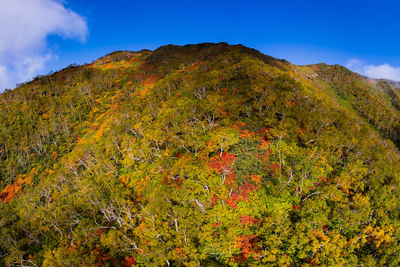 山の上から紅葉が
