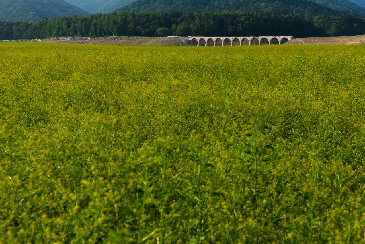 2019.8.3 北海道上士幌町 糠平湖 タウシュベツ川橋梁