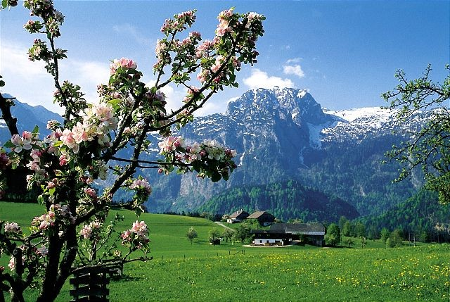 Frühling in Abtenau