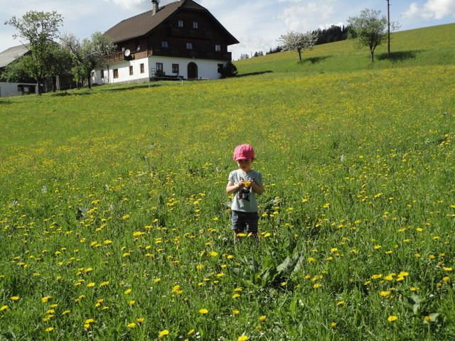Blumenwiese beim Ferienhaus Ronacher