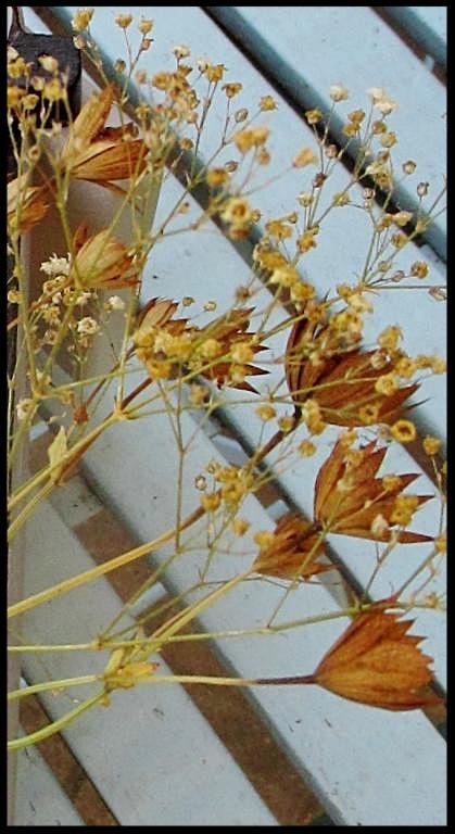 Detail Nestkastje in vorm van Olifant