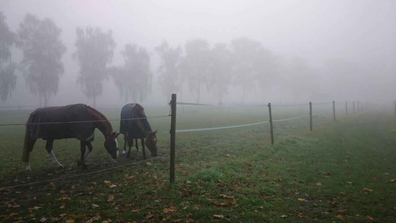 ... und die Pferden genießen den kühlen Morgen.