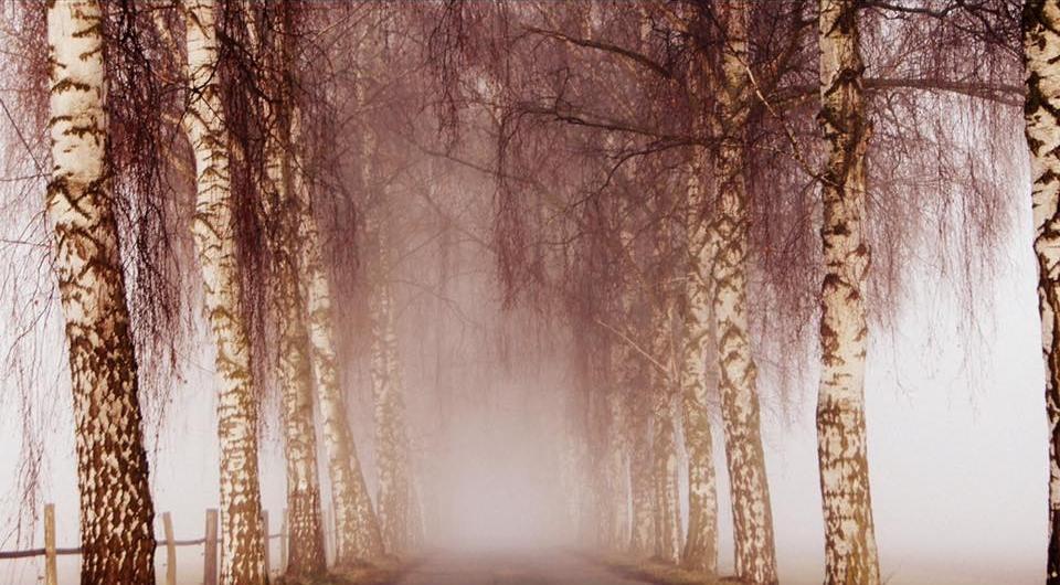 Nebelschwaden im Winter.