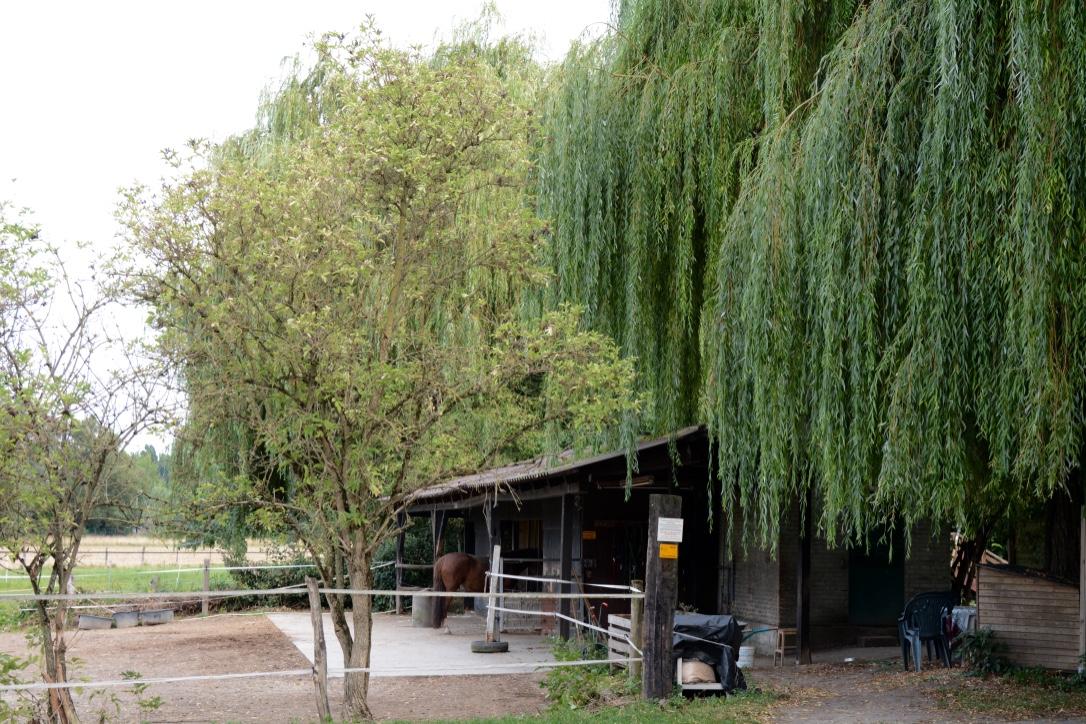 Vorbei am Ponyhaus ...