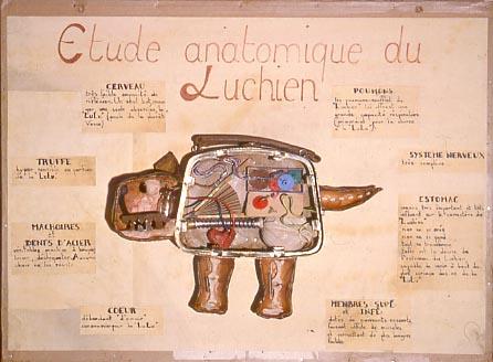 étude anatomique du Luchien