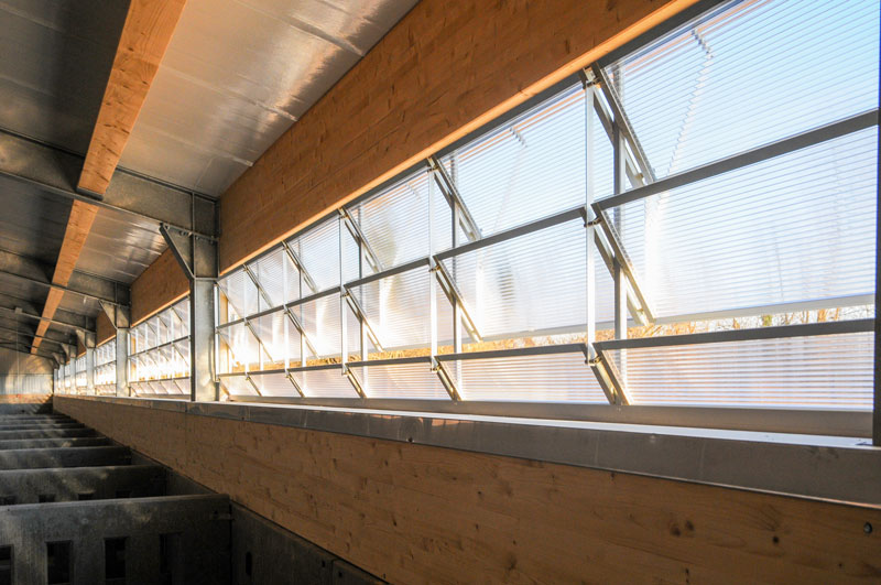 Fensterfassaden im Rinderstall