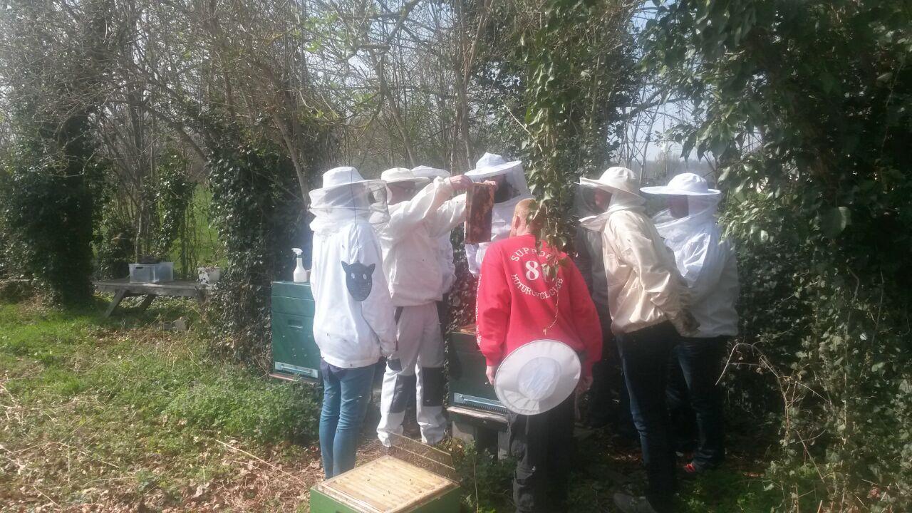 Erste Einblicke in ein Bienenvolk in kleinen Gruppen