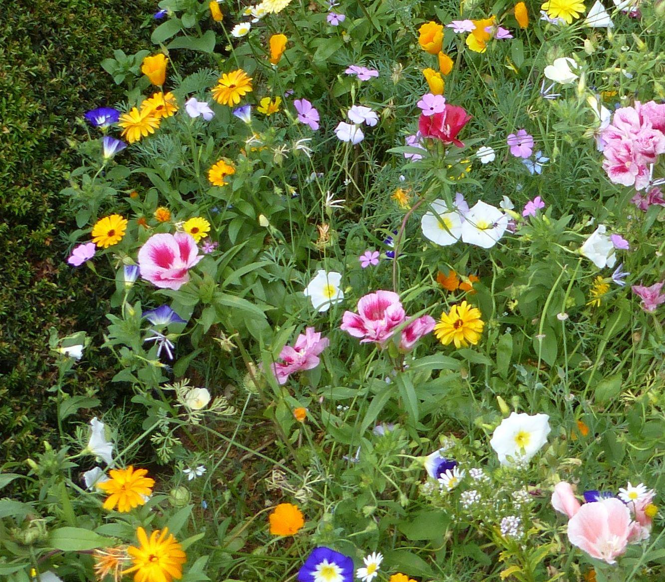 Zoom sur le fleurissement autour du Monument aux Morts pour la France, Clary.