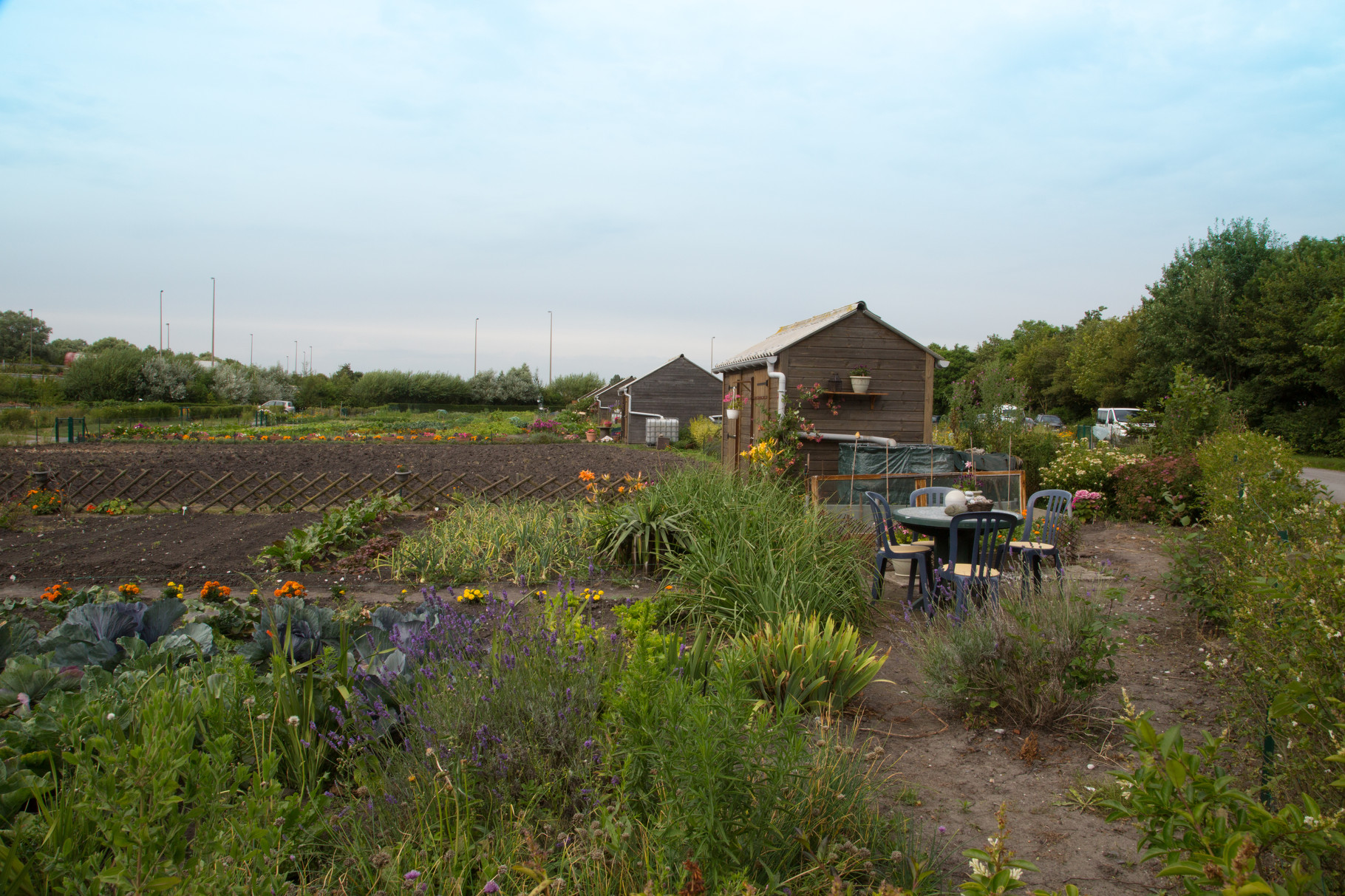 Jardins ouvriers  de la « Porte de Lille » à Calais par Denis Paillard
