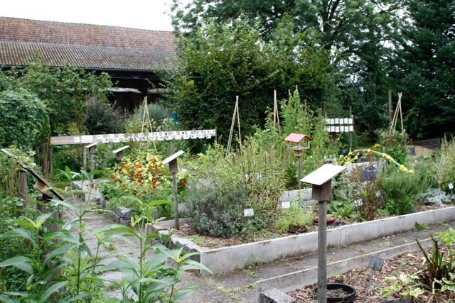 Plantes et potager au jardin naturel - Sophie Mayeux