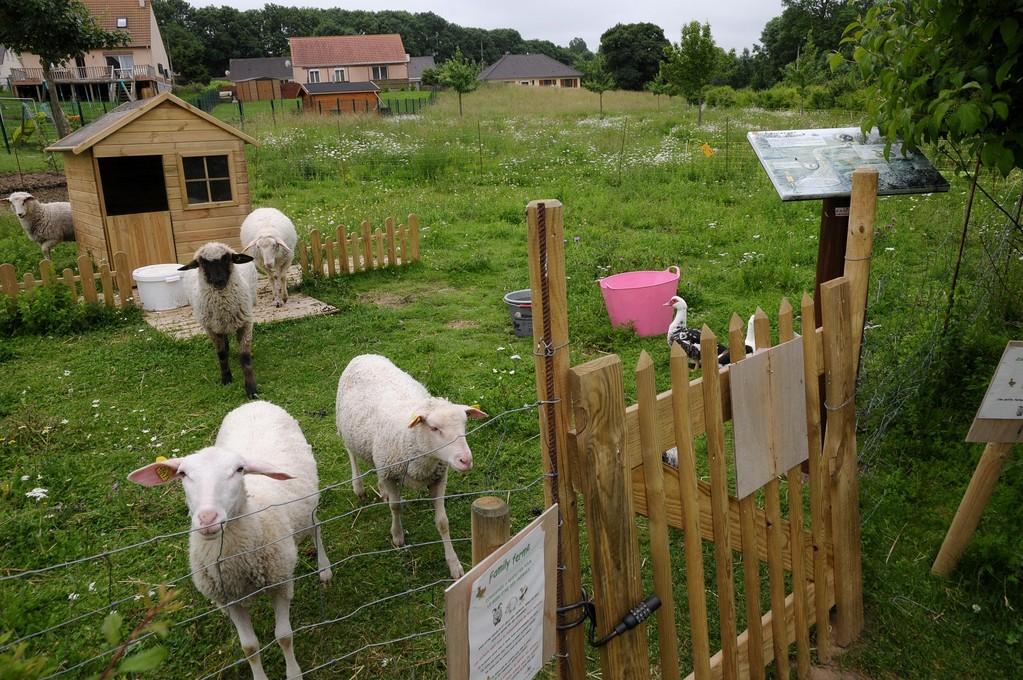 Les moutons de Croisilles - Marc Demeure