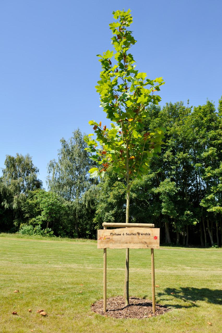 Panonceau explicatif sur un arbre à Sallaumines par Richard Soberka