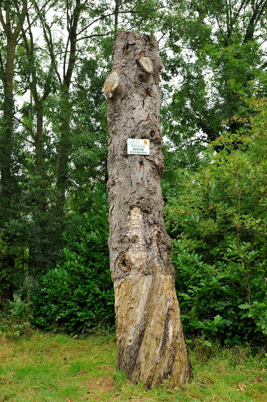 Niche écologique au Parc du château Dalle-Dumont à Wervicq-Sud par Richard Soberka