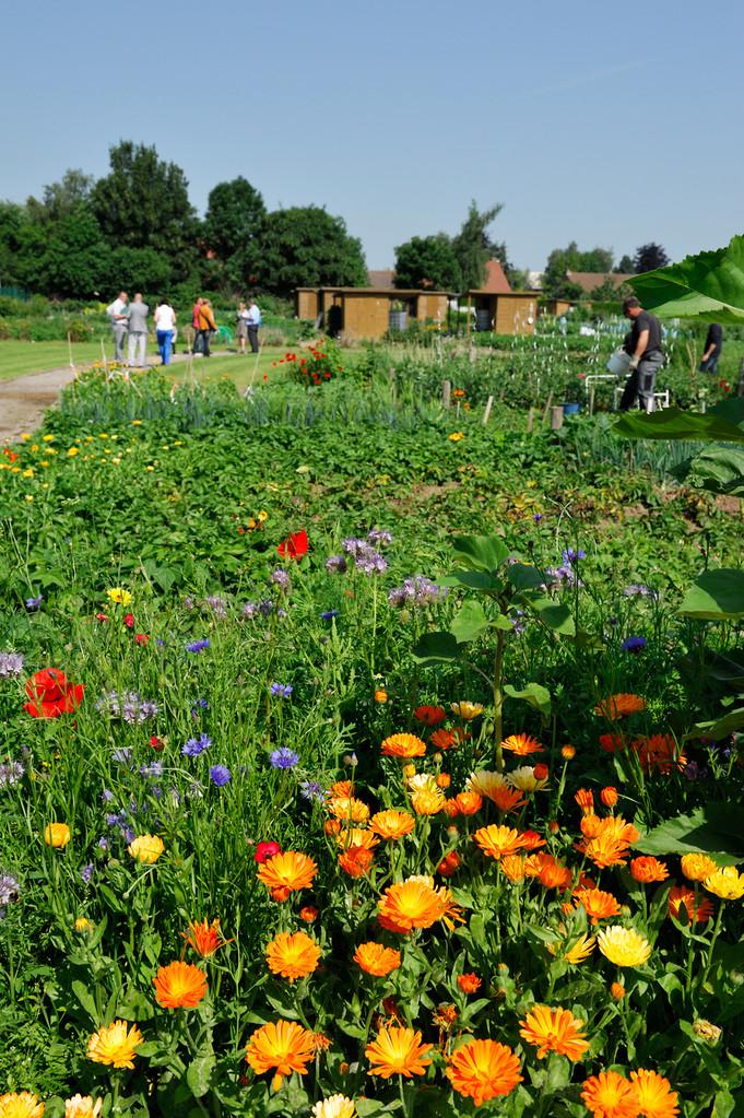 Jardins familiaux collectifs à Steenvoorde par Richard Soberka