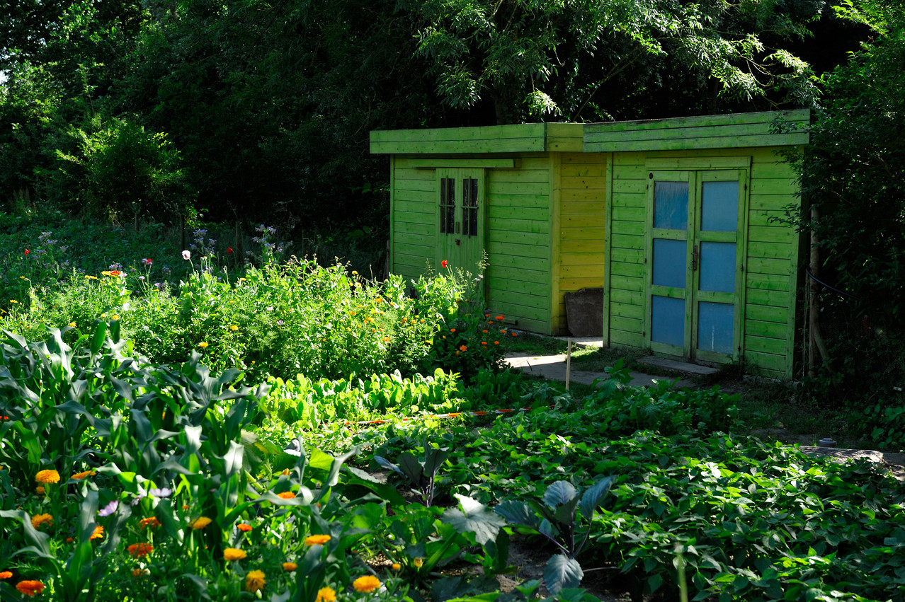 Jardin solidaire de Marck par Richard Soberka