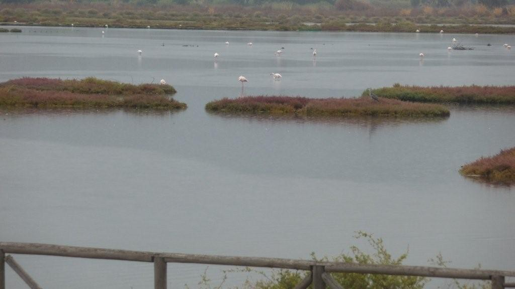 Flamingos in der Lagune westl. von Caligari