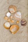 Muscheln im Sand - Stressbewältigung für Kinder